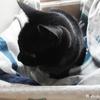 ガレ猫の湯たんぽ