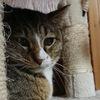 4-7   グレコ家猫日記〜グレコは幸せな猫でした〜