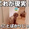 犬を迎えて、一番大変だったことは…?!