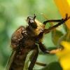 🐝大船フラワーセンターで昆虫接写しました☺