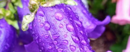 今日は雨☔でしたね。葡萄🍇の香りがしそうな感じがしたので