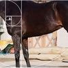 有馬記念2019の馬体を黄金比スケールを使って検証してみた