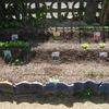 【家庭菜園】7種類、順調に発芽中‼