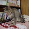 私は猫になりたいzzz