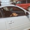 アウディa6アバント売却!! 一括査定にて5社の買取業者とユーカーパックにて車の査定見積もりしてみた!