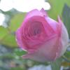 5月の庭の「主役?」