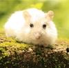 白ネズミとよみがえりの夢。