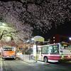 国立市大学通りの桜