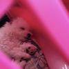 子犬と暮らすHSPの私、早速事件が、、!「犬の風邪ケンネルコフ」