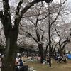 代々木公園のお花見はココで!(2019年3月28日)