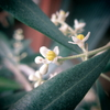 OLIVE-Missionの花盛りー