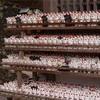 2月中旬~末頃:梅の写真スポット「お松大権現」in徳島