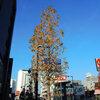 高崎駅前通り散歩 今朝は11℃・落葉進むモミジバフウ・今朝の空