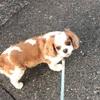 保護犬ぶん太のお散歩