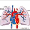 静脈血栓塞栓症(VTE)について勉強した①~VTE、PTEとは?~