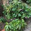 圃場の整理と種イモの準備、それと葉物野菜の苗調達