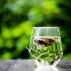 健康長寿に良いお茶&魚の缶詰を紹介レビュー!身近な食材で血液をサラサラに!