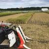 稲刈り開始