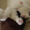 今日の黒猫モモ&白黒猫ナナの動画ー753