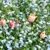 Monet's Garden in April