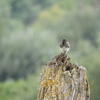 貯水池公園の野鳥たち