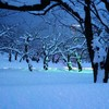 冬の五稜郭公園も美しい