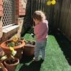 【モンテッソーリの文化教育】植物のライフサイクルが学べる家庭菜園のすすめ