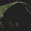 Angiosperms「継ぎ目」