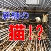 【新キャラ登場】薪棚に迷い猫が来た!?【薪ストーブと猫】