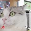 猫雑記 ~むくの悪戯~