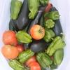 トマトをいっぱい収穫したぞー(^^)♥️