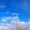 【登山】長野旅行②~入笠山:スノーシューハイク~
