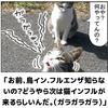 猫インフルが流行の兆し!?海外では人間に感染した例も報告済み!!(328日目)