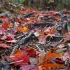 食欲の秋がきた。山ごはんの秋がきた。byもっちー