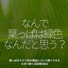 990食目「なんで葉っぱは緑色なんだと思う?」葉っぱがミドリ色の理由について調べてみた★次へ続く日記第5話★