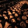 窯いっぱいに蓮華の花が咲きました(^^)
