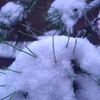『また雪が…』