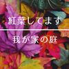 【紅葉】してます。我が家の庭。