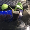 観葉植物始めました