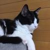 ★846鐘目『愛猫レフくんのソックリさんは!?ユーチューバーとして大人気だったでしょうの巻』【エムPのイケてる大人計画】