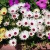 3-18   愛すべき花たち〜綺麗に咲いてよかった!?〜