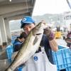 2020年9月14日 小浜漁港 お魚情報