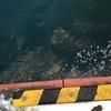 マイワシ爆釣!苫小牧東港フェンス前でサビキ釣り