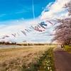 【レポ】桜前線とともに気持ちよく〜イーハトーブ花巻ハーフマラソン