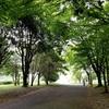 森を歩こう