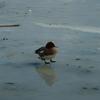 凍った諏訪湖での水鳥 〜あ、いいな、と思った時に写真を撮る