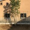 西側計画地に木を植える