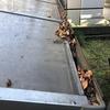 サイクルポート(自転車置き場)の屋根とその雨どいを掃除する