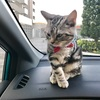 ジル(猫)と久しぶりのドライブ→通院。悪いところもなく、無事成長!