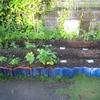 庭の畑周りの草むしり